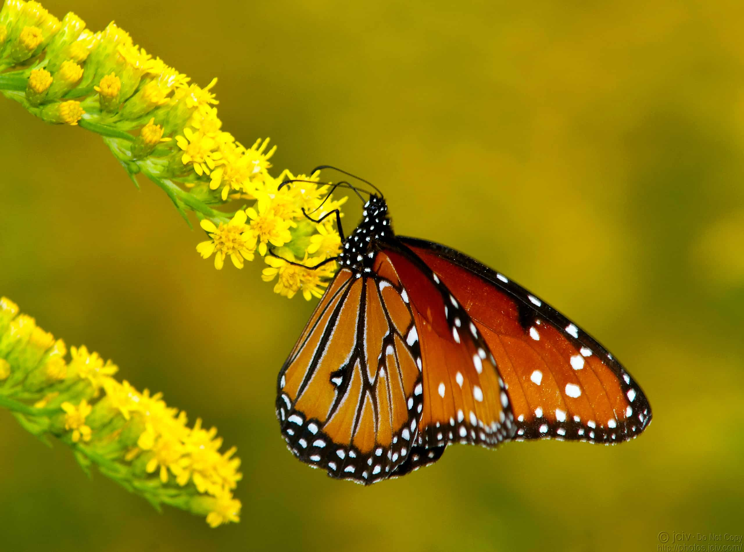 50 Beautiful Butterfly and Bird Wallpapers - Simple Help