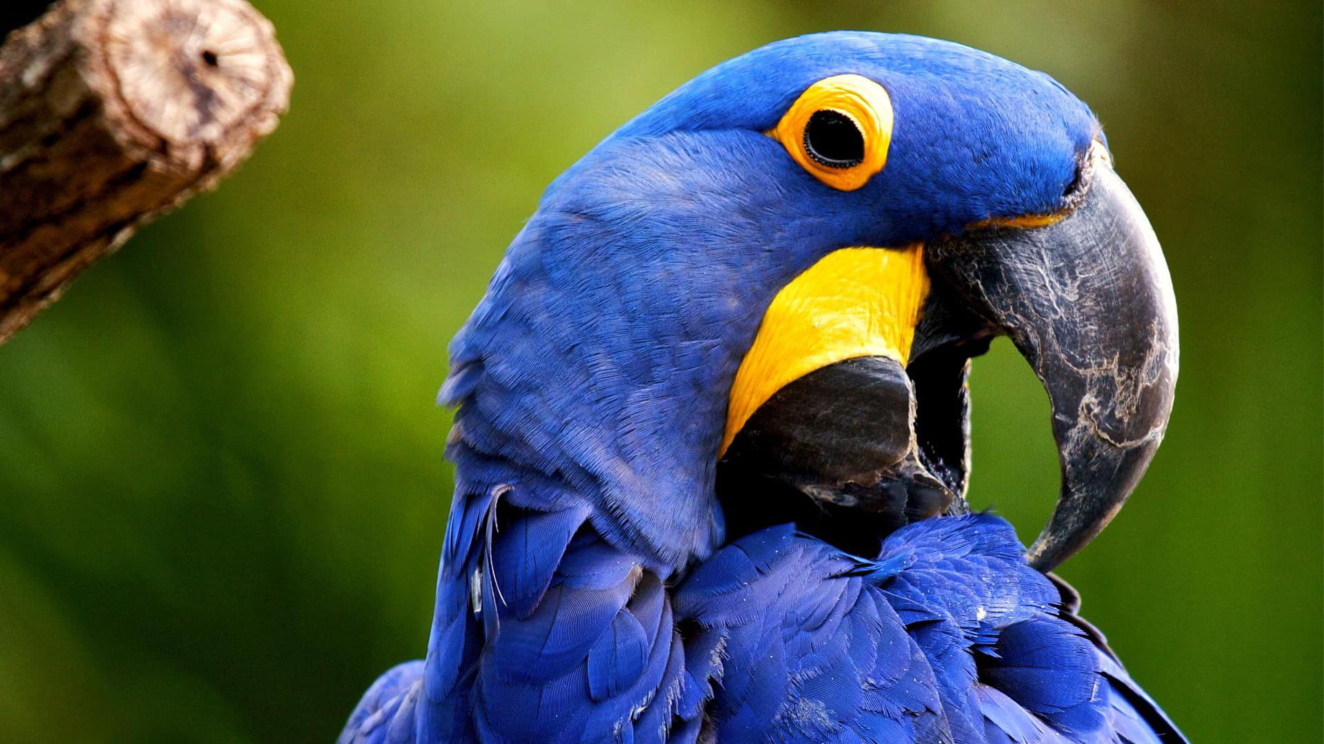 Cute Birds HD Wallpaper Free Download  HD