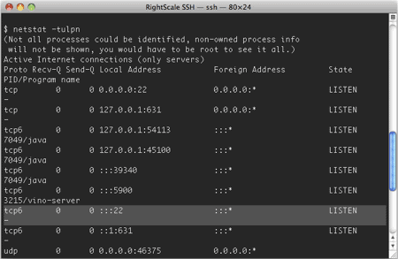 output of netstat in a terminal