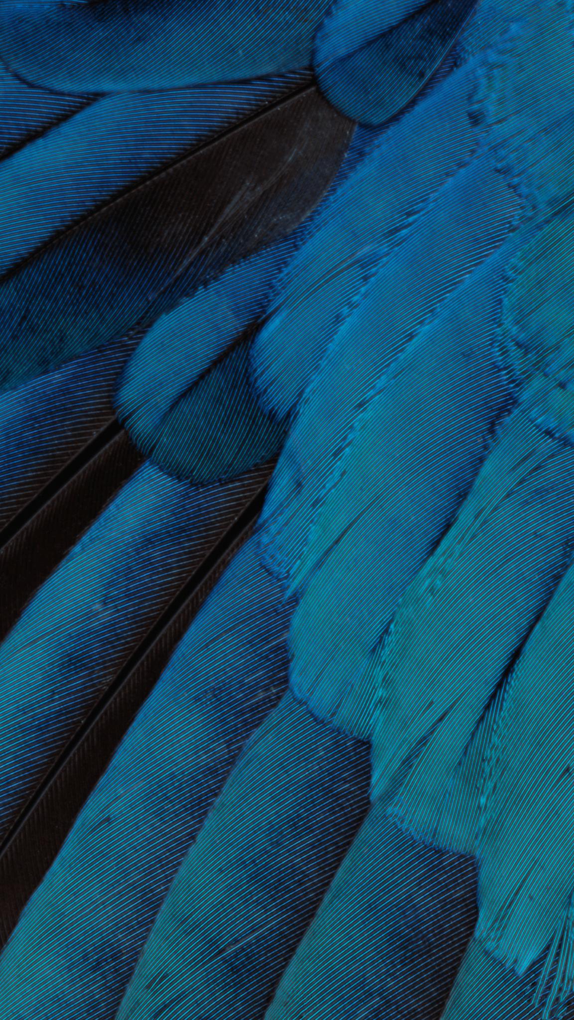 ios 9 feather wallpaper 2